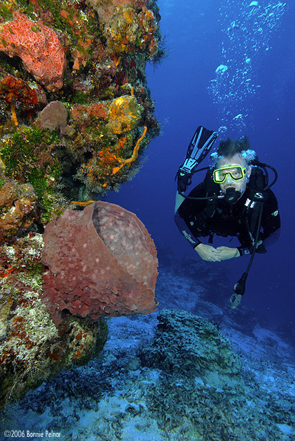Hurricane Wilma Cozumel Reefs Before and After