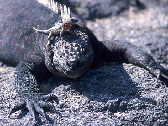 Galapagos Photo Gallery