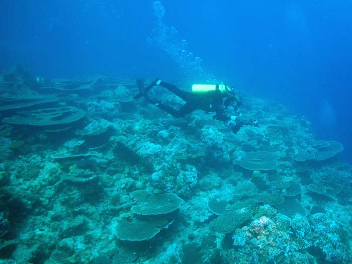 Hard Corals Reef Scene in the Maldives - Copyright Ken Knezick, Island Dreams