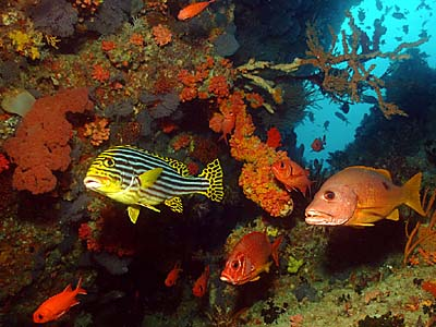 Maldives Reef Scene -- copyright Ken Knezick, Island Dreams