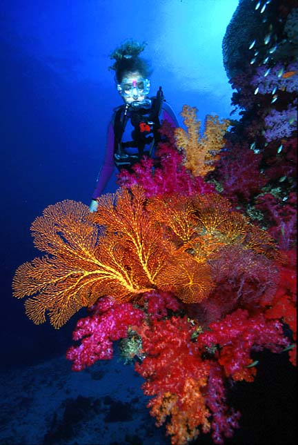 Fiji Photo Gallery courtesy of Aqua Trek Fiji - this photo by Gary Bell