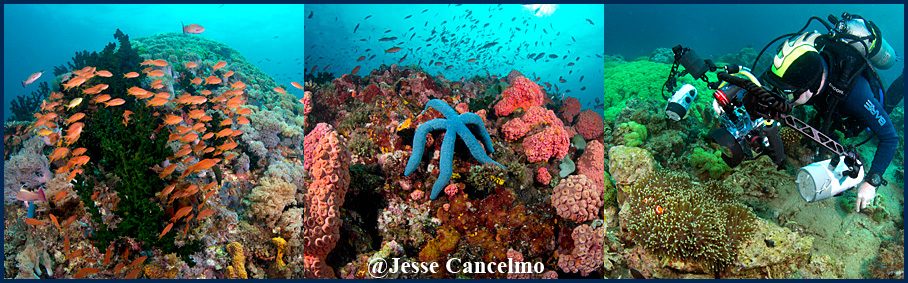Crystal Blue Resort Anilao Report - copyright Jesse Cancelmo for Island Dreams