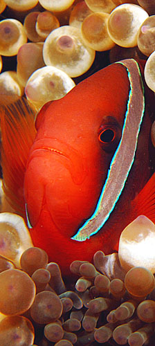 Copyright Ken Knezick, Island Dreams