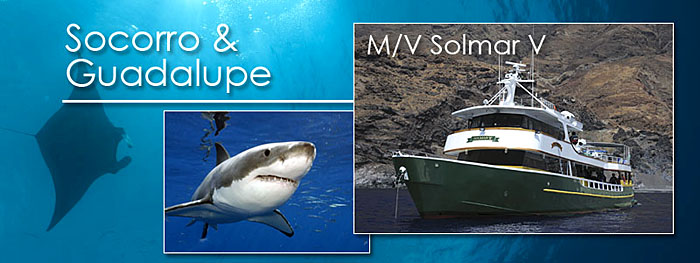 M/V Solmar V live-aboard in Socorro and Guadalupe, Mexico