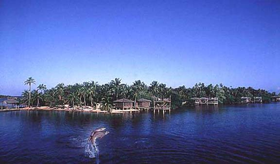 Anthony's Key Resort with Dolphins