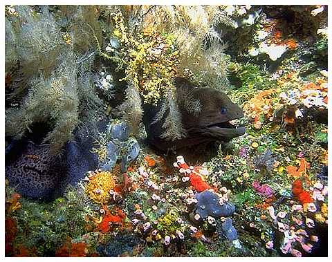 Reef Scene with Moray