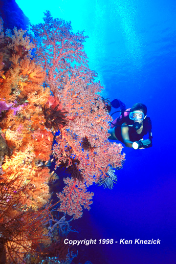 Divemaster Sushi Swims on the House Reef at Waktobi Resort