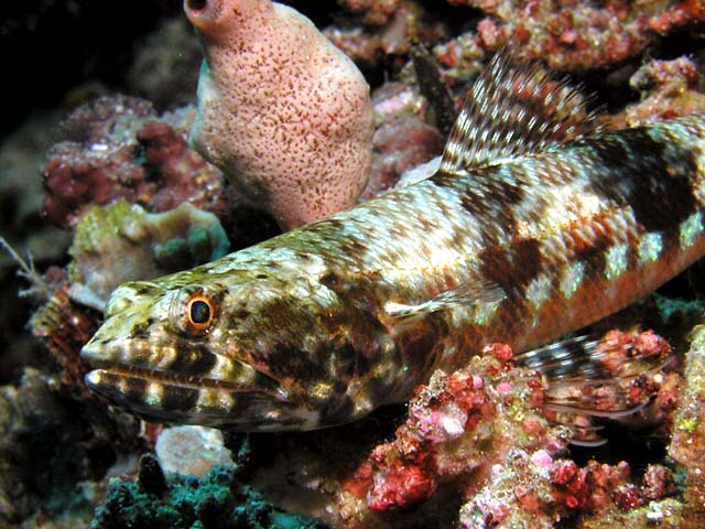 Wakatobi Photo Gallery