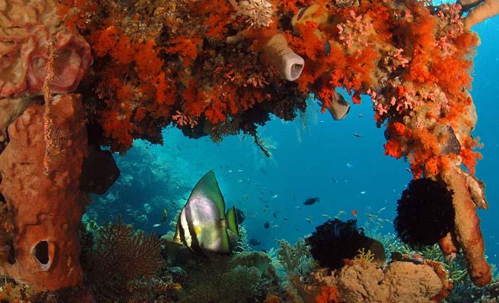 Wakatobi Wide-Angle, Copyright 2007 - Ken Knezick, Island Dreams